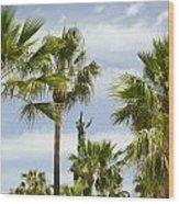 Palm Trees In Spain Wood Print