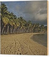 Palm Trees Line A Dominican Republic Wood Print by Raul Touzon