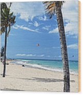 Palm Trees On Ocean Park Beach Wood Print by George Oze