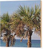 Palm Trees Wood Print by Sandy Keeton
