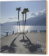 Palm Trees With Shadows Wood Print