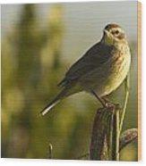 Palm Warbler, Everglades National Park Wood Print