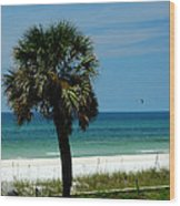 Palmetto And The Beach Wood Print