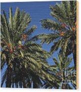 Palms 9838b Wood Print