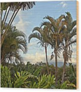 Palms In Costa Rica Wood Print