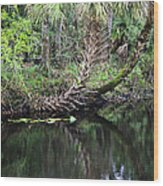 Palms On The River Wood Print