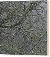Palo Verde In The Rain Wood Print