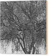 Palo Verde Tree 2 Wood Print