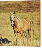 Palomino Horse Wood Print