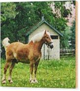Palomino In Pasture Wood Print