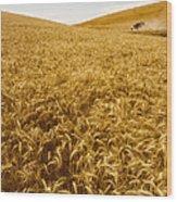 Palouse Wheat Wood Print