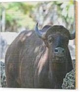 Pam The Bull Wood Print