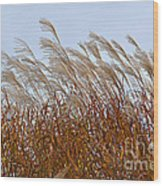 Pampas Grass In The Wind 1 Wood Print