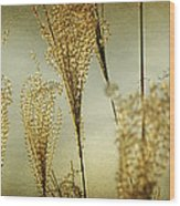 Pampas Grass Panoramic Wood Print