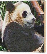 Panda In Tree Wood Print