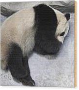 Panda Paws Wood Print