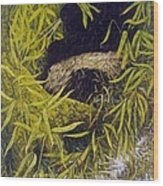 Panda Wood Print by Steven Wood