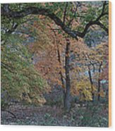 Panorama Of Fall Colors At Lost Maples Wood Print