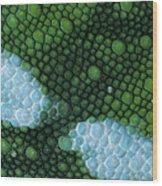 Panther Chameleon Chamaeleo Pardalis Wood Print