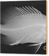 Panther Grouper X-ray Wood Print