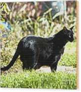 Panther In The Backyard Wood Print by Cheryl Poland