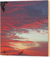 Papaya Colored Sunset With Geese Wood Print