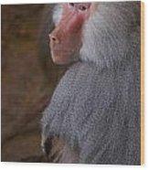 Papio Hamadryas Baboon Wood Print