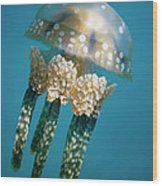 Papuan Jellyfish Mastigias Papua, Palau Wood Print