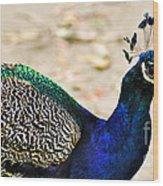 Parading Peacock Wood Print