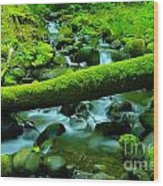 Paradise Of Mossy Logs And Slow Water   Wood Print