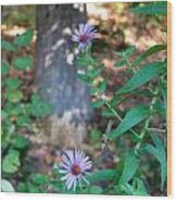 Paradise Springs Flowers 1 Wood Print