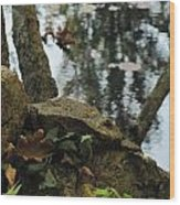 Paradise Springs Reflections Wood Print