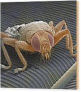 Parasitic Fly, Sem Wood Print