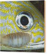 Parasitic Isopod On Grunt, Belize Wood Print
