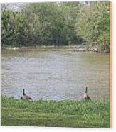 Parenting Geese 1 Wood Print
