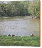 Parenting Geese 4 Wood Print