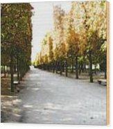 Parisian Park Walkway Wood Print