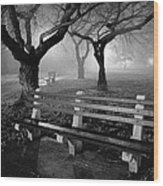 Park Benches Wood Print