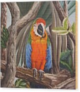 Parrot At New Orleans Zoo Wood Print