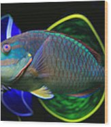 Parrot Fish With Glass Art Wood Print