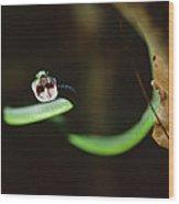 Parrot Snake Leptophis Ahaetulla Wood Print