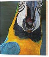 Parrot Squawking Wood Print