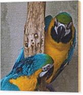 Parrot Talk Wood Print