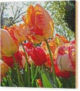 Parrot Tulips In Philadelphia Wood Print