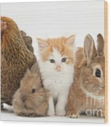 Partridge Pekin Bantam With Kitten Wood Print