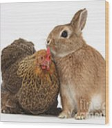 Partridge Pekin Bantam With Rabbit Wood Print
