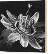 Passion Flower In Black And White Wood Print