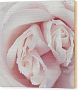 Passion For Flowers. One Rose Two Hearts Wood Print