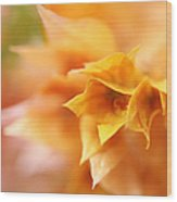 Passion For Flowers. Orange Delight Wood Print