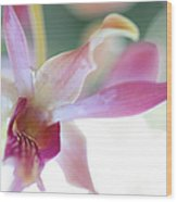 Passion For Flowers. Sensualite Wood Print